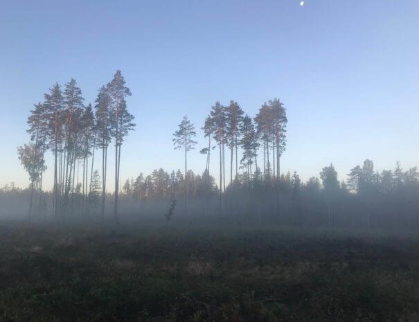 hommikune mets - vereta jaht